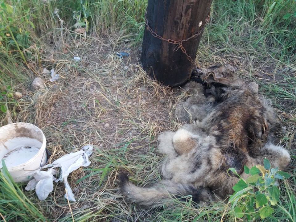 Corpse Of Dead Dog, Chained To A Tree Found Near Animal