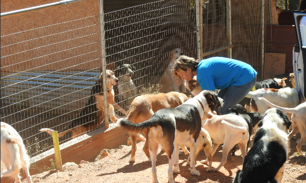 Dog Rescue In One Of Greece's Most Hostile And Beautiful